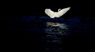 Eclipse. Post de poesía coral de Artistas-Creadores.